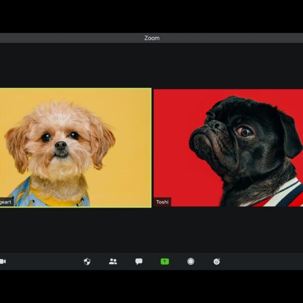 dwa psy rozmawiające w czasie videokonferencji);